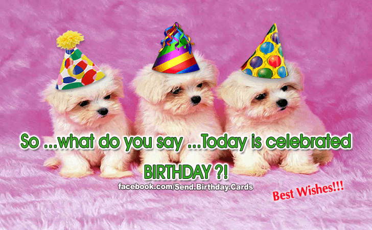 Birthday Cards Images | Happy Birthday Images | So...what do you say...Today is celebrated BIRTHDAY?!