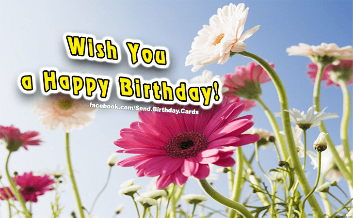 Birthday Cards | Wish You a